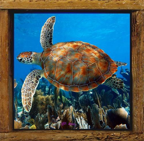 Turtle 36