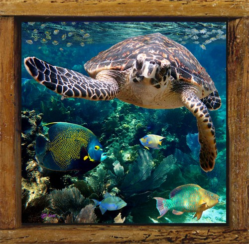 Turtle and Friends
