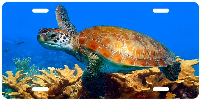 """TURTLE AND THE CORALS"""