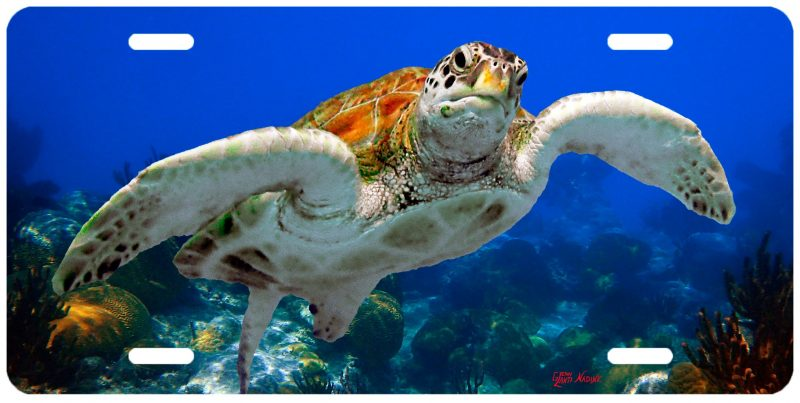"""TURTLE WITH CORALS"""