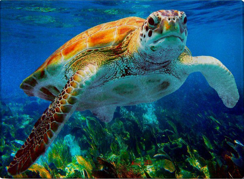 Turtle Cutting Board